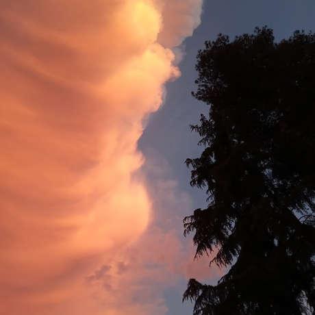 Cielo y árbol